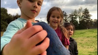 INCREDIBLY DISCIPLINED PARROT MEETS KIDS FOR THE FIRST TIME AND LET THEM TOUCH HIM PATIENTLY