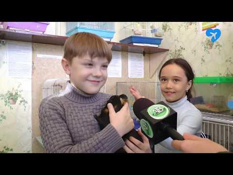 В центре детского творчества родились волнистые попугайчики (12.02.2019)