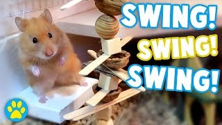Hamster REALLY Wants A Walnut! | Iodine The Syrian