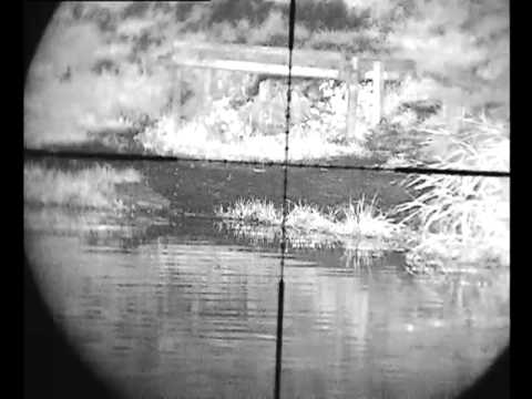 shooting rats  on fishing pond