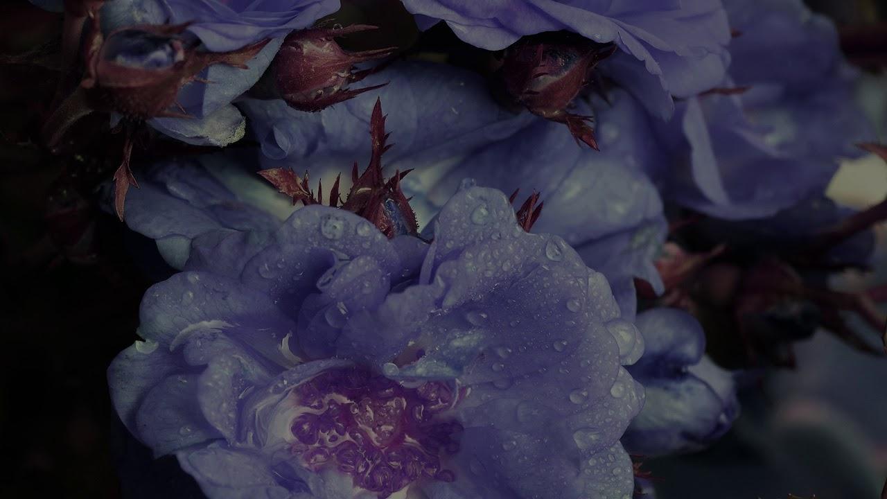 Miserysauga - A Devotion