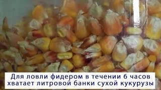 Как приготовить прикормку для рыбы из кукурузы