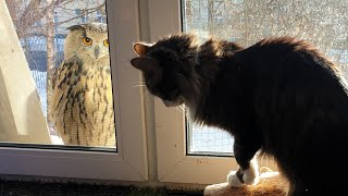"""The owl said """"good morning"""" (get lost!), and then..."""