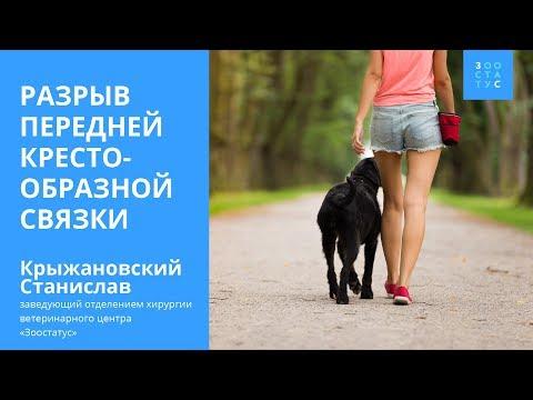 Разрыв ПКС у собак