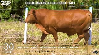 Coro 2241 b4 fiv