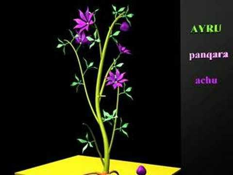 Reproduccion sexual en plantas sin flores yahoo