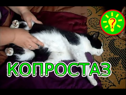 Копростаз у кота