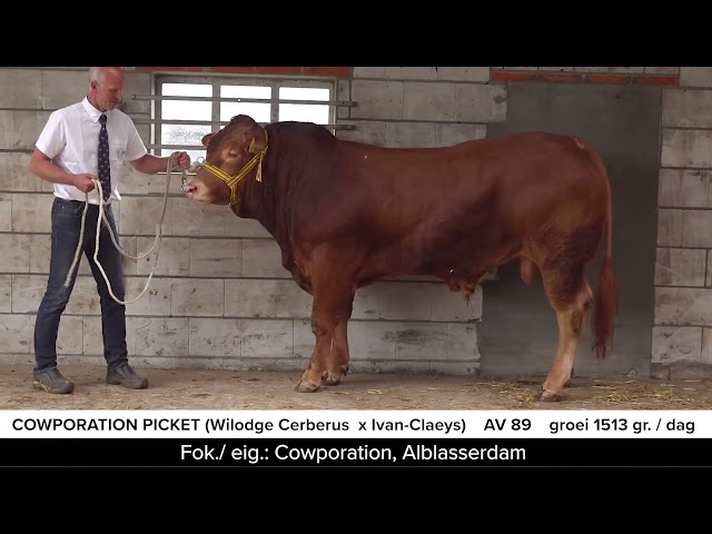 Video Cowporation Picket