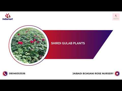 Corporate Video of Jaibadi Bijasani Rose Nursery, Maval, Pune