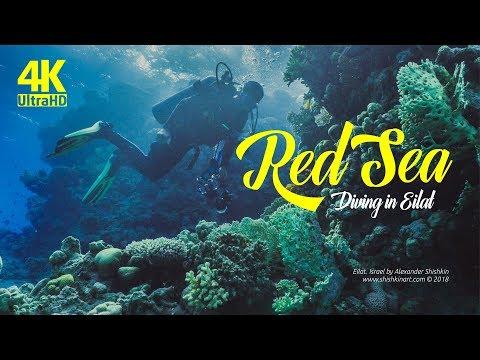 סרטון צלילה במפרץ אילת באיכות 4K