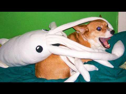 Cute Pets And Funny Animals Compilation #13