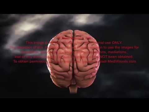 Samobójstwo neuronów