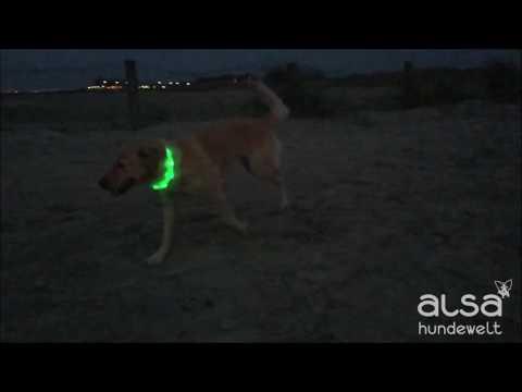 Hunde-Leuchthalsband