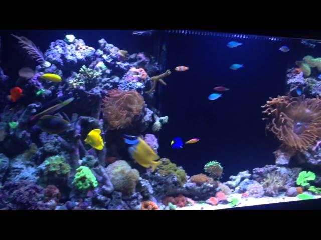 REEF TANK ADDICTION Season 1 Episode 4 Ian's 150 Gallon Reef