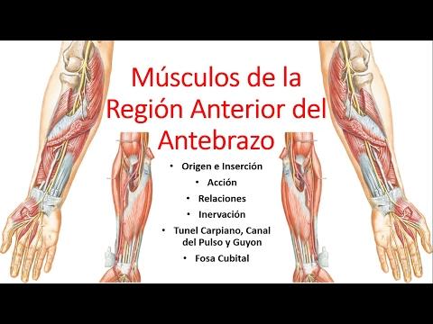 Magnesio, b6 de dolor de espalda