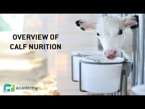 , title : 'Dairy Calf Nutrition Overview