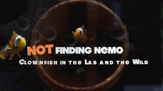 Thumbnail of Not Finding Nemo: Clownfish in the Lab and the Wild video