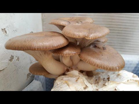 I sintomi dellunghia intaccati con un fungo