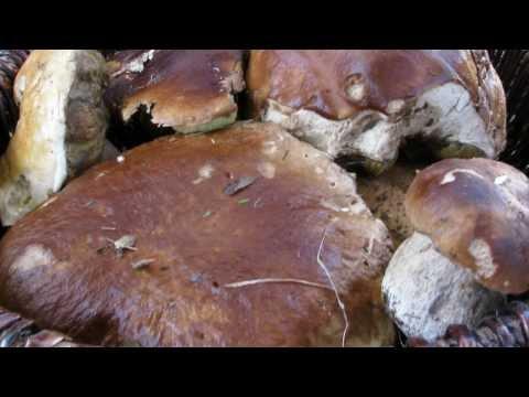 Come trattare un fungo di Acquario i piccoli pesci