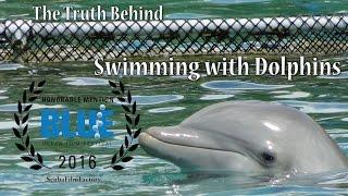 Правда о «Плавании с Дельфинами»