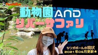 <シンガポール>定番観光地・シンガポール動物園とリバーサファリに行ってみた!ちょこっとご紹介。