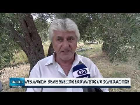Αλεξανδρούπολη: Σοβαρές ζημίες στους ελαιοπαραγωγούς από σφοδρή χαλαζόπτωση   09/08/2021   ΕΡΤ
