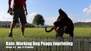 Kato: Working Dog Puppy Imprinting Weeks 5-8