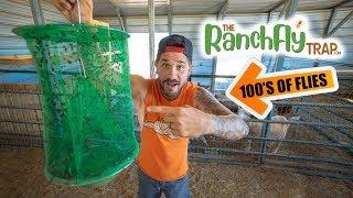 Teaching JUSTIN RHODES How To Catch Flies!! 100's of Flies!!