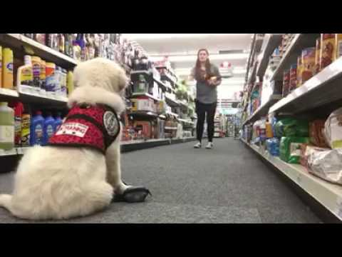 Service Dog In Training Practices