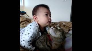 赤ちゃんに叩かれても怒らない猫