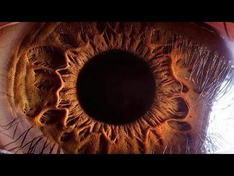 Про глаза орган зрения