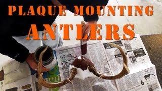 How To Plaque Mount Antlers DIY