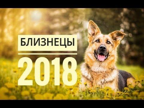Гороскоп 2017 для близнецов от василисы володиной