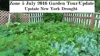 July 2016 Zone 5 Upstate New York Vegetable Garden Update *DROUGHT*