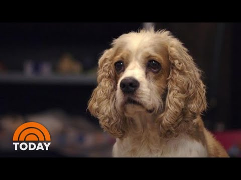 Wanted: 10,000 Dogs To Help Scientists Study Canine Aging | TODAY