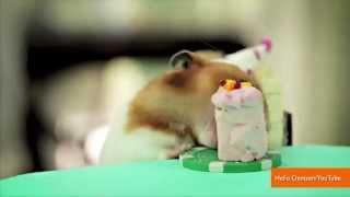 Tiny Hamsters Who Ate Burritos Are Back For A Tiny Hedgehogs Party
