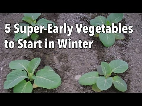 5 Quick to Grow Vegetables to Start This Winter
