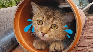 """Don't Worry, Your Family Will Find You"" cat stuck in a pipe 