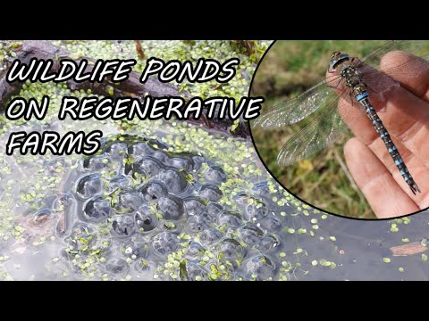 Pond Restoration Project | Stage One - Clearing
