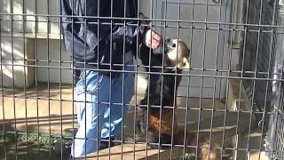 2018.01.07市川市動植物園「ハルマキ」ちゃんのパクパクタイム