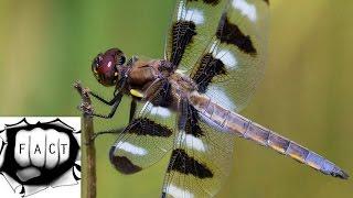 Top 10 Unusual & Amazing Dragonflies