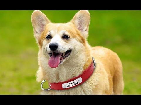 Ошейник из искусственной кожи для собак прочный мягкий