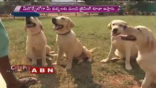 Dog Daycare Centers In Hyderabad | ABN Telugu