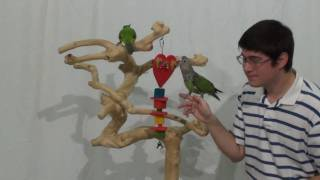 Valentine's Day Parrot Toy