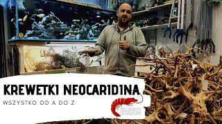 Krewetki Neocaridina - od czego zacząć?