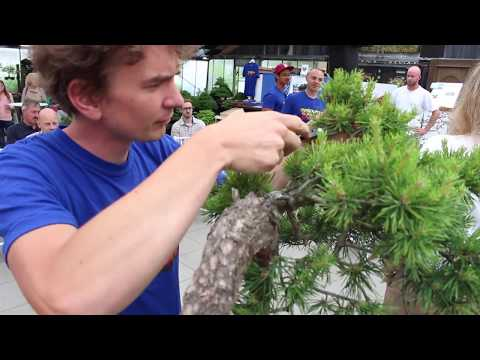 Bonsai demo by Jan Culek