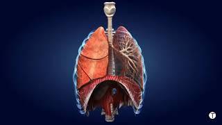 Video  علاج سرطان الرئة