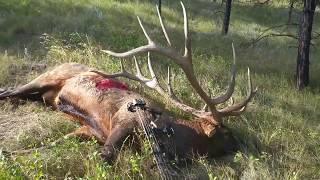 The World-Record Archery Elk