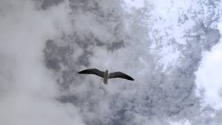чайки голодные в небе