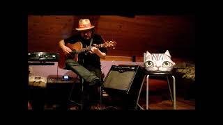 Video Blues pro Kočku